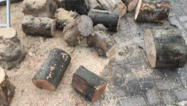 Bomen kappen | Hoveniersbedrijf De Wild Diensten